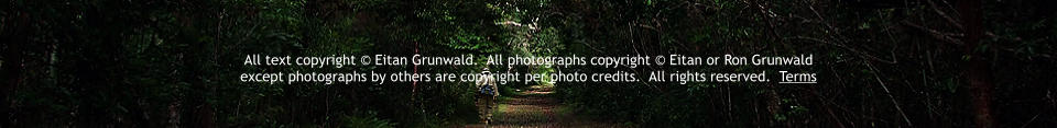 All text copyright © Eitan Grunwald.  All photographs copyright © Eitan or Ron Grunwald  except photographs by others are copyright per photo credits.  All rights reserved.  Terms